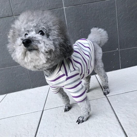 ORIGINAL 七分袖boarder tops . [  gray × purple ]