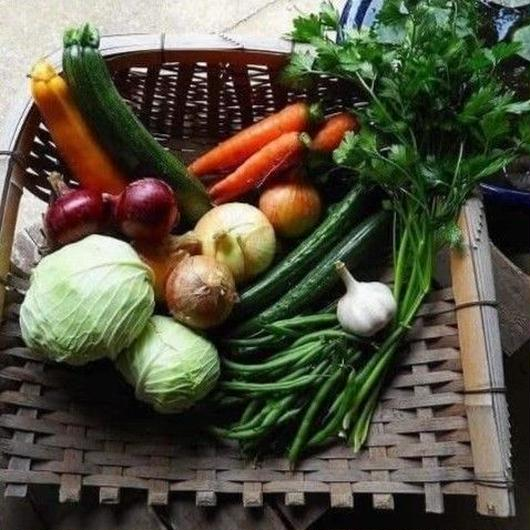 自然農(無農薬・無肥料・不耕起) 野菜セット [BIG FAMILY FARM] made in 佐賀県