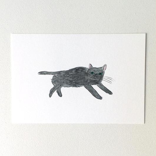 ポストカード ネコちゃん