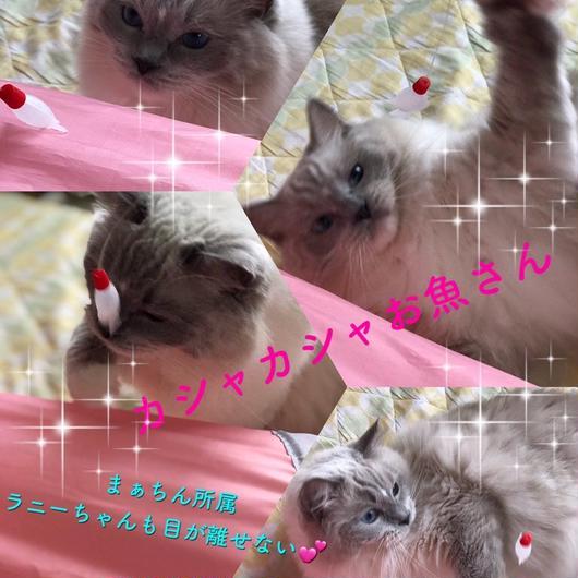 カシャカシャお魚さん 猫じゃらし