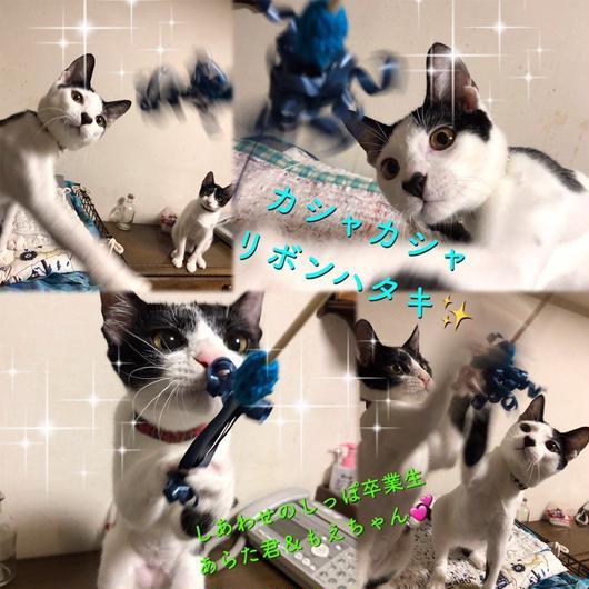 カシャカシャリボンハタキ猫じゃらし