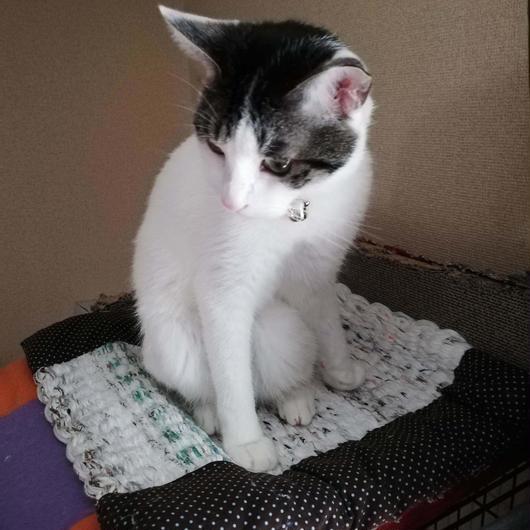 さき織り 猫マット 小サイズ