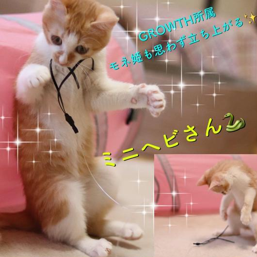 ミニヘビさん猫じゃらし