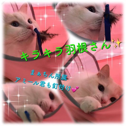 キラキラ羽根さん猫じゃらし