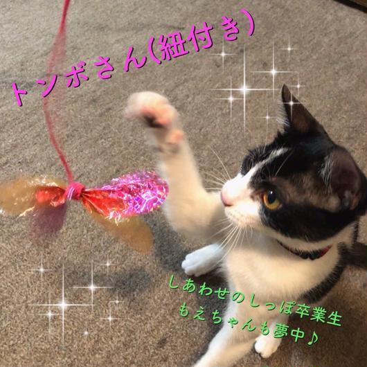 カシャブンヒモ付きトンボさん 猫じゃらし