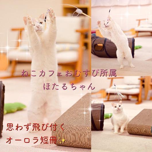オーロラ短冊 猫じゃらし(ヒモタイプ)