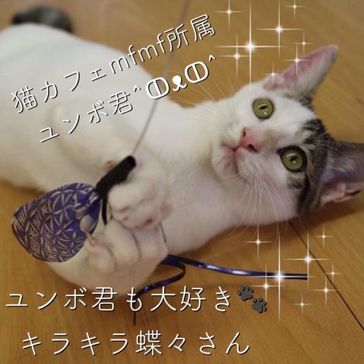 キラキラ蝶々さん猫じゃらし