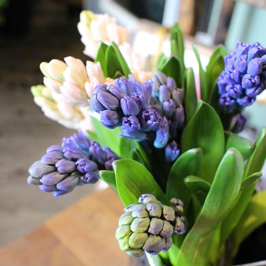 お花のボリュームを追加したいお客様へ