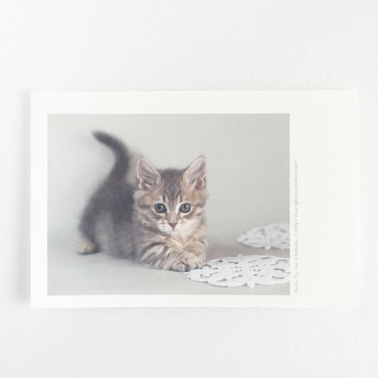 フォトカード_cat3(マンチカン)