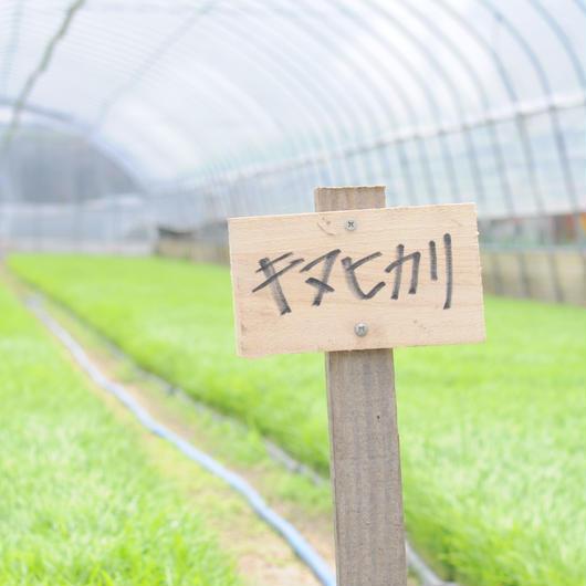 近江吉田屋キヌヒカリ 10kg