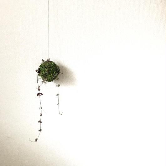 緑のボールリース