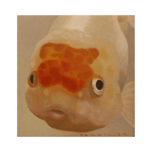 金魚[山下三千夫]