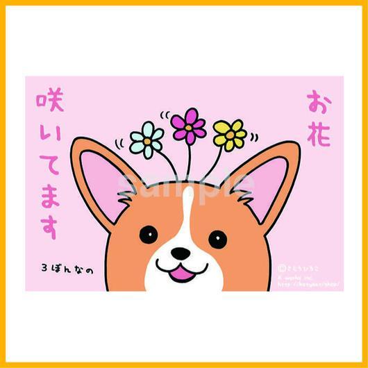 お花咲いてますポストカード