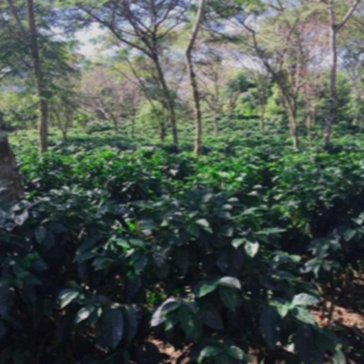 【定期便】ニカラグア サンタフェ農園 300g・豆