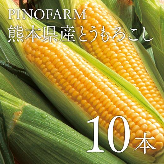 【有機肥料使用】電子水から作った熊本県産とうもろこし10本