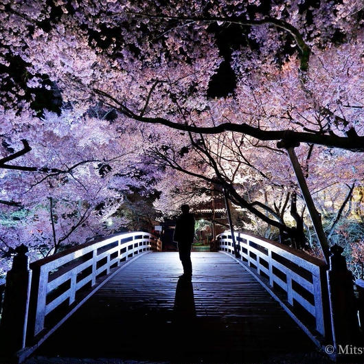 4月14日(土)16:15−18:45「第二部 ストロボ風景『桜』」(初級〜) 講師:閃光フォトグラファー 小山光弘