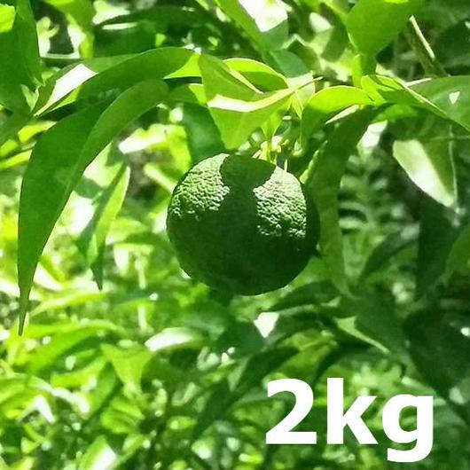 川根本柚子の青柚子(無農薬) 2kg