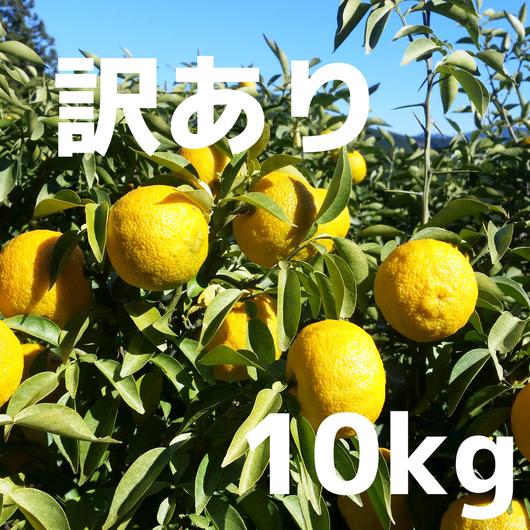 【訳あり】川根本柚子の完熟柚子(無農薬・無肥料) 10kg