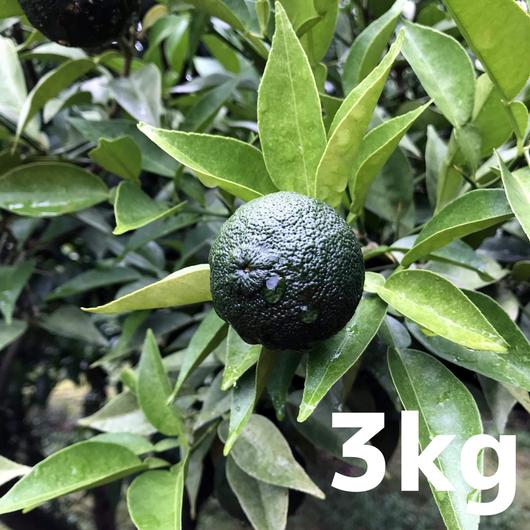 川根本柚子の青柚子(無農薬・無肥料) 3kg