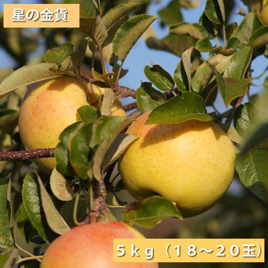 【送料無料】「星の金貨」5kg(18~20玉)【青森県産りんご:家庭用】