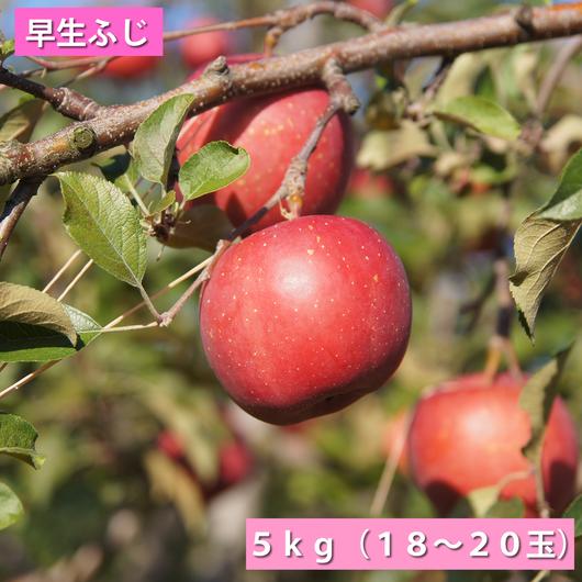 【送料無料】「早生ふじ」5kg(16~20玉)【青森県産りんご:家庭用】