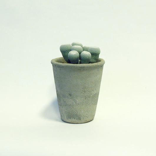 小人の帽子(コビトノボウシ)