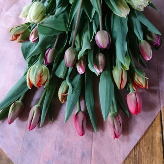 チューリップだけの贅沢な花束(ギフト用25本入り)
