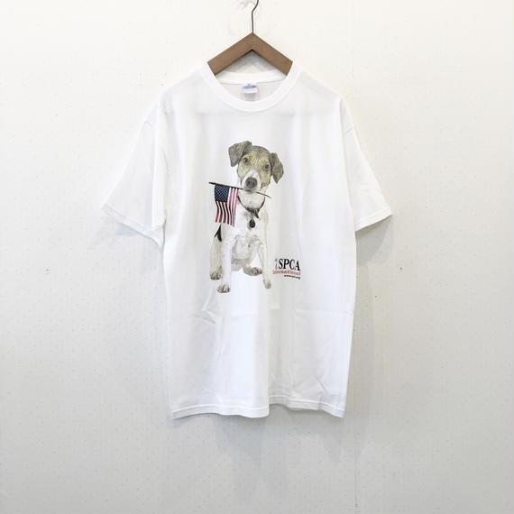 used dog TS