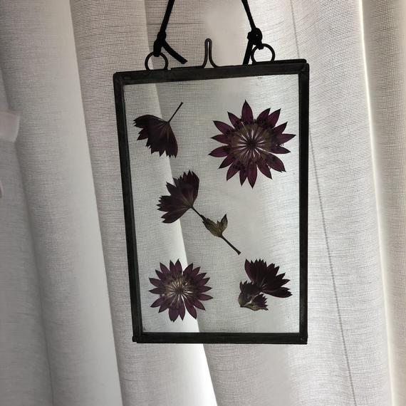 flower Photo flame=吊型 M アストランチア=