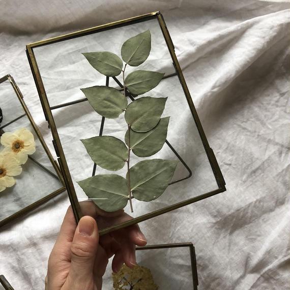 flower Photo flame=置型 rectangle  eucalyputs=