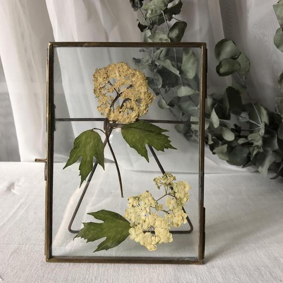 flower Photo flame=置型 rectangle barbena=