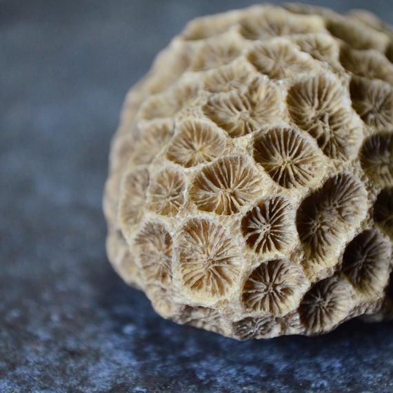 泥染めの珊瑚 / 金井工芸