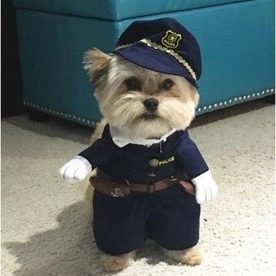 IDEPET 小さな犬の服 おもしろ犬の衣装 ヨークズチワワなどの服