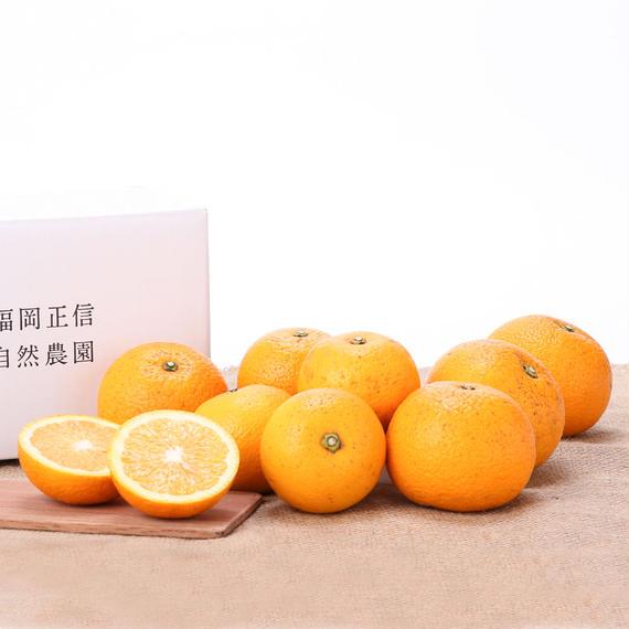 【450-115】八朔(2kg)