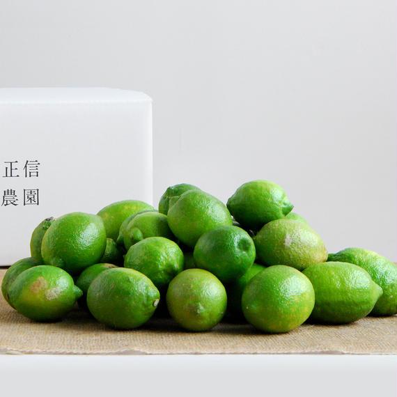 【450-101】レモン(5kg)