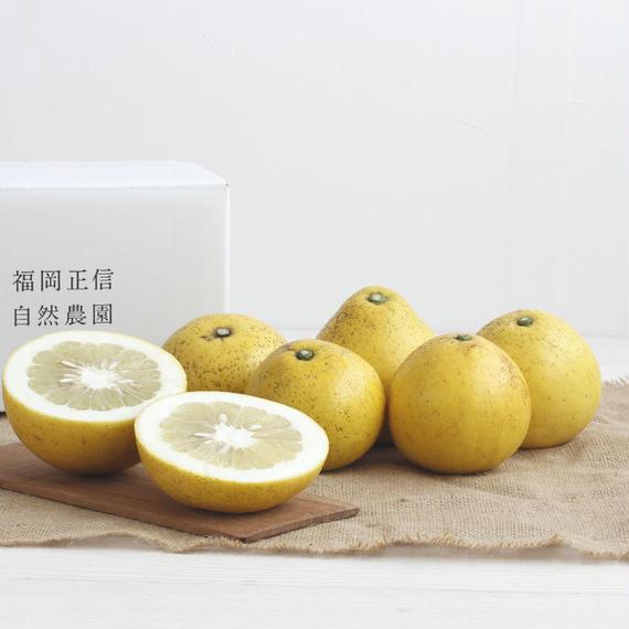 【450-109】文旦(2kg)
