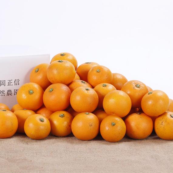 【450-119】ブラッドオレンジ(5kg)