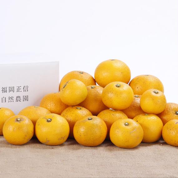 【450-116】八朔(5kg)