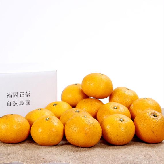 【450-113】甘夏(5kg)