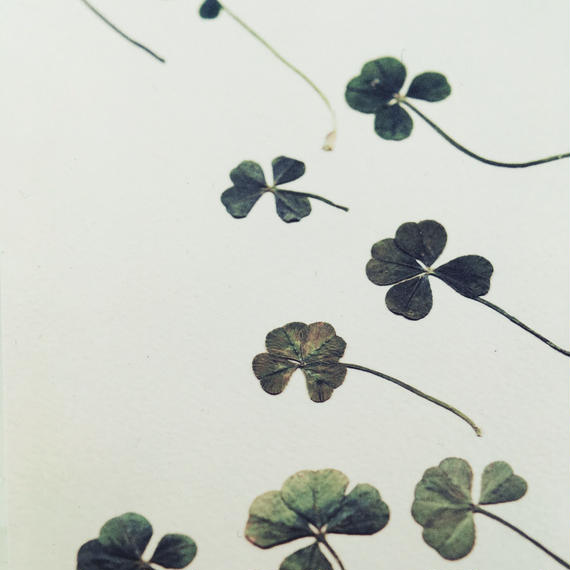 "message post card / "" May many good luck comes to you. "" / Four-leaf clover"