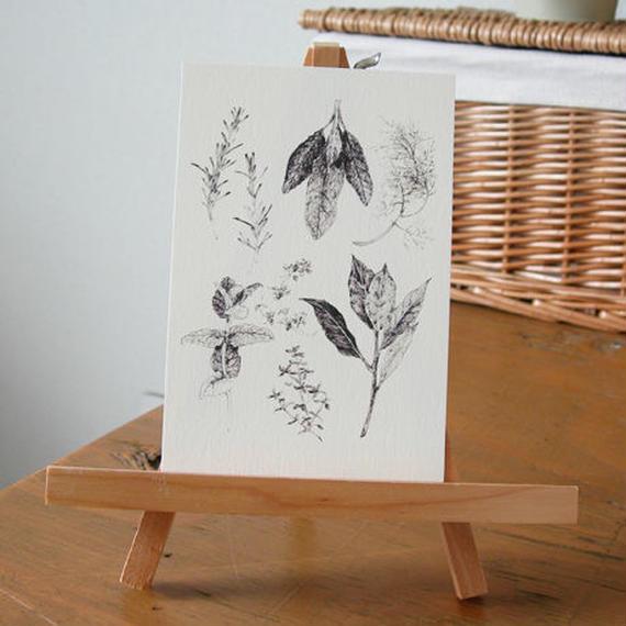 postcard / herbs, pen