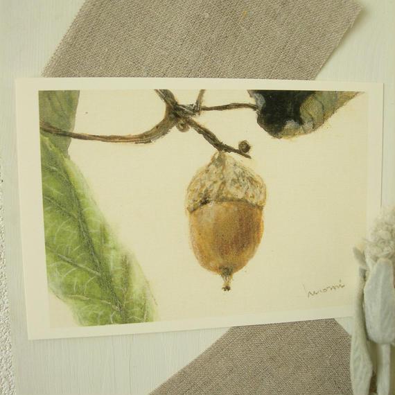 postcard / 茶色のどんぐり