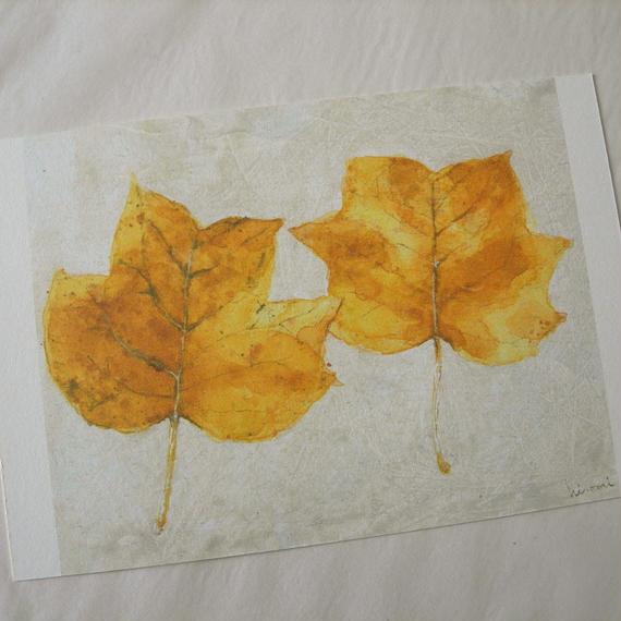 postcard / 落ち葉 -yellow poplar