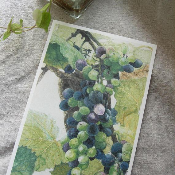 postcard / 熟した葡萄