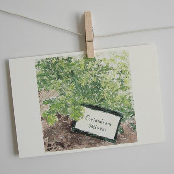 postcard / コリアンダー