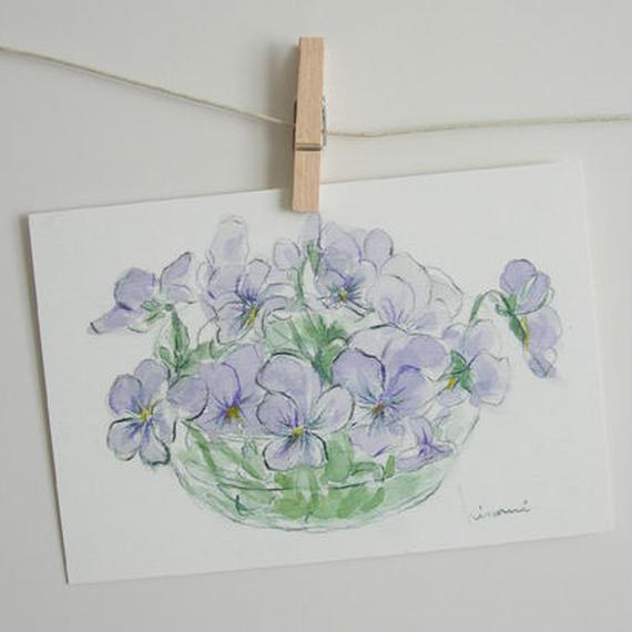 postcard / ビオラ