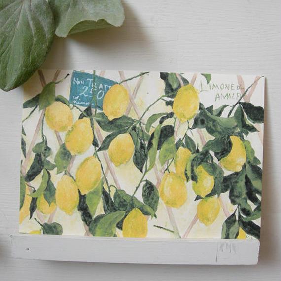 postcard / limone