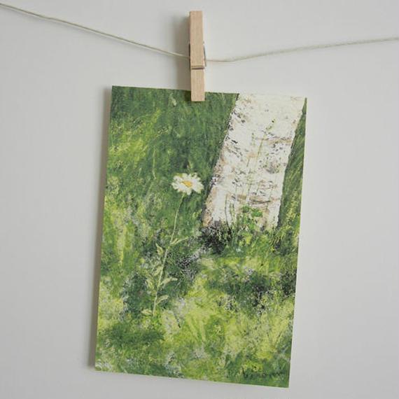 postcard / 一本のマーガレット