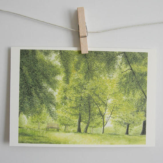 postcard / プラタナスの並木