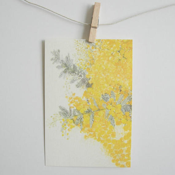 postcard / mimosa 1